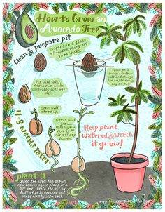 to grow an avocado tree from a pit! cute illustration found on First Pancake Studio to grow an avocado tree from a pit! cute illustration found on First Pancake Studioto grow an avocado tree from a pit! cute illustration found on First Pancake Studio Indoor Garden, Garden Plants, Indoor Plants, House Plants, Tree Garden, Garden Art, Potted Garden, Indoor Flowers, Garden Oasis