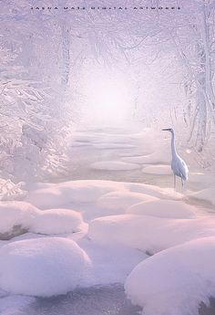 Winter *❄️~*.Wishes & Dreams.*~❄️* Enchanted Momment by Jasna Matz