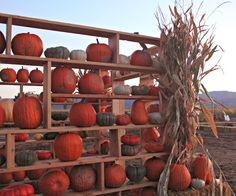 Moore Minutes: Fall Adventures...including Corn Maze Date Night and Annual Pumpkin Carving Party