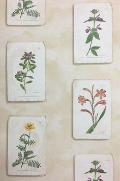 Discover hundreds of wallpaper ideas on HOUSE - design, food and travel by House & Garden including Curtis Botanical by Lewis & Wood