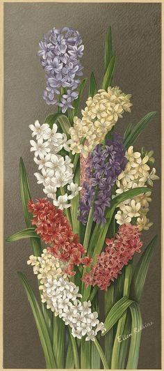 Hyacinths  1861-1897