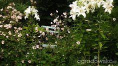 Kondziowy ogrod cz II - strona 684 - Forum ogrodnicze - Ogrodowisko
