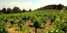 The Champagne region contains over 76000 acres of vine yards!
