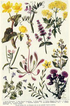 Vintage Botanical Floral Illustration Art  by zippitydoodlepaper, $8.00