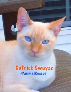 Catrick Swayze is cooler than your cat.