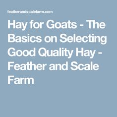 Hay for Goats - The Basics on Selecting Good Quality Hay - Feather and Scale Farm