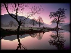 purple reflection