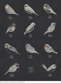 Birds with Bows print by Amy Borrell (http://cakewithgiants.bigcartel.com/product/birds-of-australia) $30