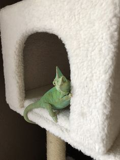 This is my cat tree Chameleon Pet, Veiled Chameleon, Cute Reptiles, Reptiles And Amphibians, Cute Creatures, Beautiful Creatures, Animals And Pets, Baby Animals, Cute Lizard