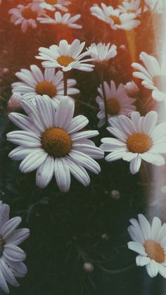 Flower aesthetic Hintergründe - - # Hintergrundbilder Information About The Indoor Bonsai Plant Arti Tumblr Wallpaper, Flor Iphone Wallpaper, Wallpaper Pastel, Sunflower Wallpaper, Iphone Background Wallpaper, Aesthetic Pastel Wallpaper, Trendy Wallpaper, Pretty Wallpapers, Nature Wallpaper