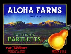 1970s California Dreams Little Prints Fruit Crate Labels Doll Miniatures Style B