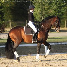 seriously love this. can't count how long it's been since i've seen a horse offering piaffe with an engaged and slightly lowered hind end AND the head and neck in a natural, balanced position (poll is the highest point and face isn't behind the vertical). bonus: look how lovely her equitation is. i want to ride like this.