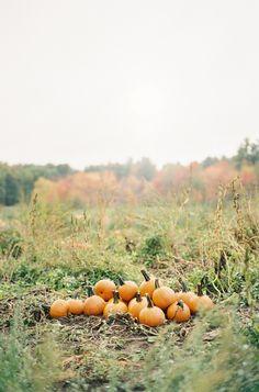 The Pumpkin Patch Hello Autumn, Autumn Day, Autumn Trees, Autumn Leaves, Winter, Halloween Tumblr, Fall Halloween, Fall Season, Tis The Season