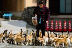 Cats from cat island Aoshima, Japan