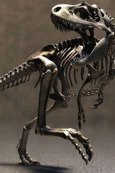 T Rex iPhone 5 Wallpaper Dinosaur Skeleton, Dinosaur Bones, Dinosaur Fossils, Dinosaur Art, Tyrannosaurus Rex Skeleton, Prehistoric Dinosaurs, Prehistoric Creatures, Jurrassic Park, Dinosaur Tattoos