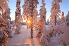The Winter's Tale - Sunrise in the winter forest in Finland Winter Light, Winter Snow, Winter White, Eternal Snow, Snow Covered Trees, I Love Snow, Lappland, Winter's Tale, Illustrations