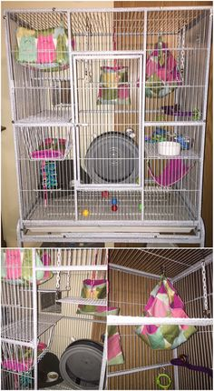 Henny & Penny's cage