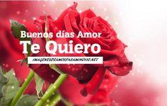 imagenes de rosas con frases de amor descargar gratis