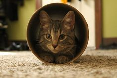 I brought home a cardboard tube for my little princess