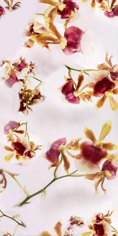 Estampa Orquídeas