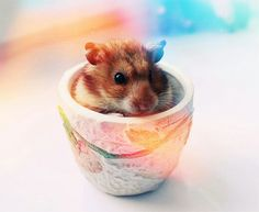 Beautiful hamster photography :)