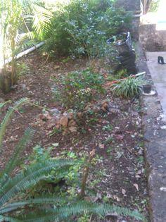 Los estudiantes también limpiaron las jardineras del #P01Cuernavaca del #Cobaem_Morelos #juventudcultayproductiva