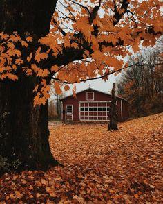 Autumn leaves will always fall. Autumn Cozy, Autumn Fall, Autumn Scenery, Autumn Aesthetic, Best Seasons, Fall Pictures, Hello Autumn, Autumn Inspiration, Fall Season