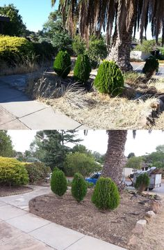 Weed Trimming, Edging, Mowing, Pruning Palms, Pruning and General Tidy. What can Trusted do for you?