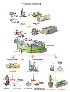 Anaerobic Digestion On Pinterest Microbiology Renewable