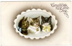 Early Embossed CATS KITTENS Helena Maguire ? BB London Postcard