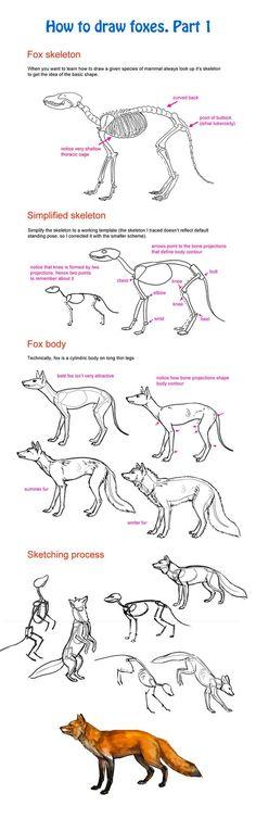 Comment dessiner un renard 1 3063 comment dessiner