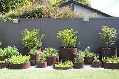 Planters out of old metal drums or barrels.  #metal #planter