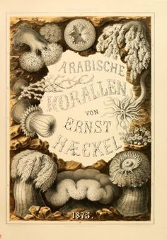 """histsciart: """" Arabische Korallen This week's book feature is on Arabische Korallen by Ernst Haeckel, published in 1876 in Berlin. Written in German, this book focuses on coral from the Red Sea and life in Egypt. Ernst Haeckel was a. Botanical Illustration, Illustration Art, Vintage Illustrations, Ernst Haeckel Art, All About Me Art, Natural Form Art, Alien Art, Vintage Typography, Botanical Prints"""
