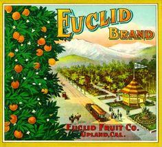 Upland Euclid MT Baldy Orange Citrus Fruit Crate Label Art Print | eBay