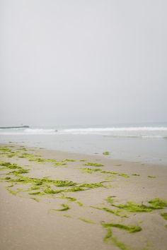 Fog at Moss Landing State Beach, in Moss Landing, California