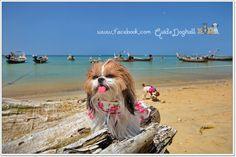 Lovely dog on the beach. Nai Yang Beach #Travel #Thailand ++ English language support >> http://ThailandHolidays7.com