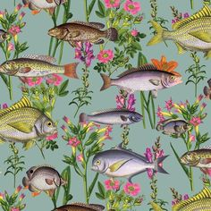 Lagoon Teal Fish Wallpaper by Holden Multicoloured Fishes 12171