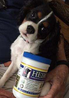 It all starts with your caring to keep them in optimum health. whether young or old, special breeds or rescued mixes. Wags and Woofers is dedicated to finding the most trusted and innovative Veterinarians and their counsel about food products and Pet Health in general.