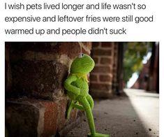 New Funny Memes Kermit Humor Truths Ideas Memes Humor, Funny Jokes, Funniest Memes, Funny Kermit Memes, Fuuny Memes, Humor Humour, Saturday Memes, Sapo Meme, Haha