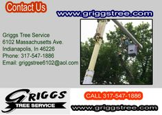 http://www.griggstree.com/contact-us