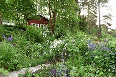 Norra Sverige genom Claus Dalbys kameralins - fint!