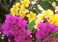madagascar rainforest flowers - Google Search