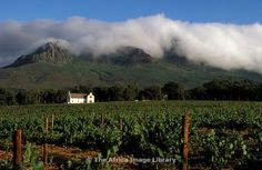 Photos and pictures of: Dornier vineyard, manor house, Cape Dutch architecture, Stellenbosch, South Africa - The Africa Image Library Cape Dutch, South Africa, Vineyard, Pictures, Photos, Houses, Mountains, Architecture, Gallery