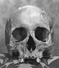 Skull Tattoo Design, Skull Design, Skull Tattoos, Body Art Tattoos, Skull Painting, Matte Painting, Skull Reference, Skull Anatomy, Skeleton Drawings