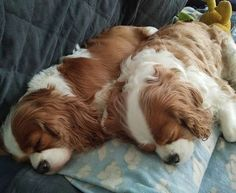 Mum Rosie and daughter Lani having a snooze on the couch ...keeping each other…