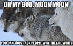 Top Ten Animal Memes of 2013. Moon Moon is a fictional wolf character that is portrayed as a mentally challenged outcast in the pack. On Tumblr, the character is often paired with silly interior monologues in a similar vein to the Doge meme. Source: Know Your Meme  http://knowyourmeme.com/