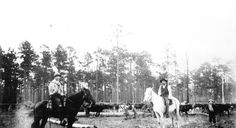 The real Florida Crackers...... Florida Memory - Cowboys with cattle - Green Cove Springs, Florida