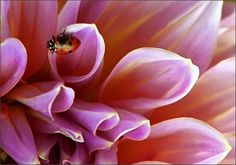Flower with a ladybug on it