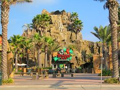 The Rainforest Cafe in Galveston, TX  Number of Visits 1