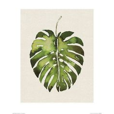Summer Thornton - Tropical Leaf I - 40 x Canvas Print Wall Art Cool Paintings, Painting Prints, Wall Art Prints, Canvas Prints, Canvas Paintings, Tropical Art, Tropical Leaves, Leaf Wall Art, Canvas Wall Art